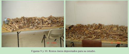 Figuras 9 y 10. Restos óseos